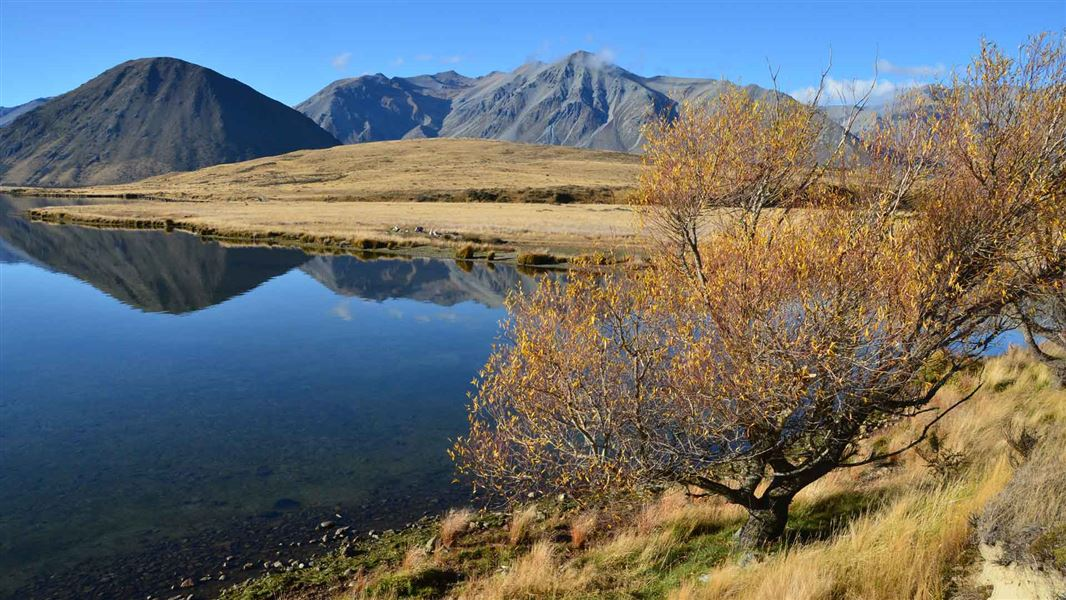 Lake Heron tracks: Walking and tramping in Hakatere Conservation Park