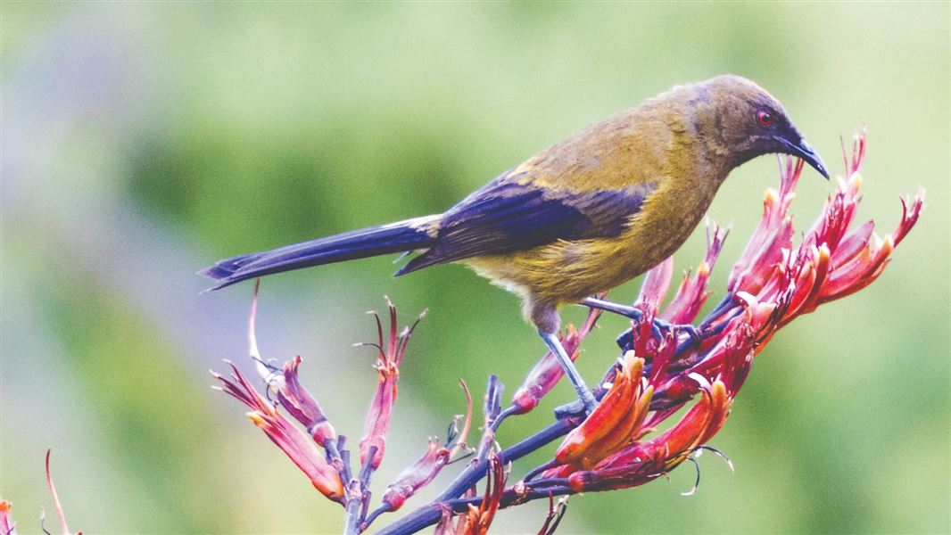 The New Zealand Biodiversity Strategy | Ministry for the Environment