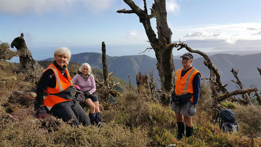 Wellington kiwi roost gets pest control boost: Media release 21 December 2017Wellington kiwi roost gets pest control boost - 웹
