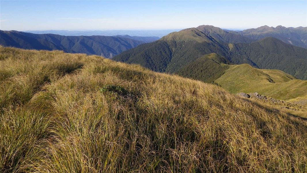 Tararua Forest Park: Wairarapa places to visit