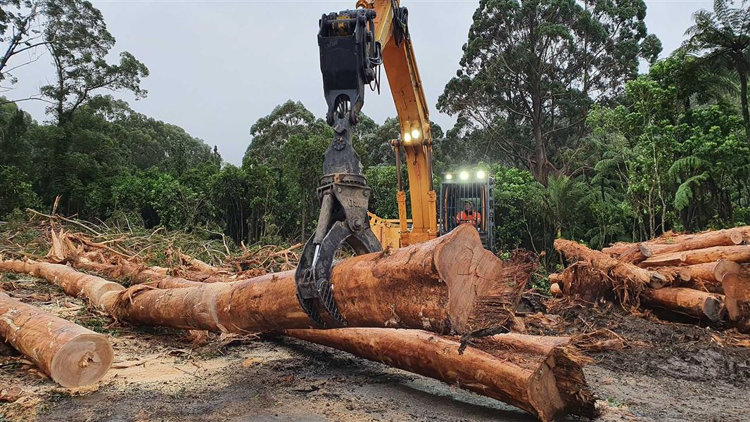 Locals gain from removal of unsafe trees