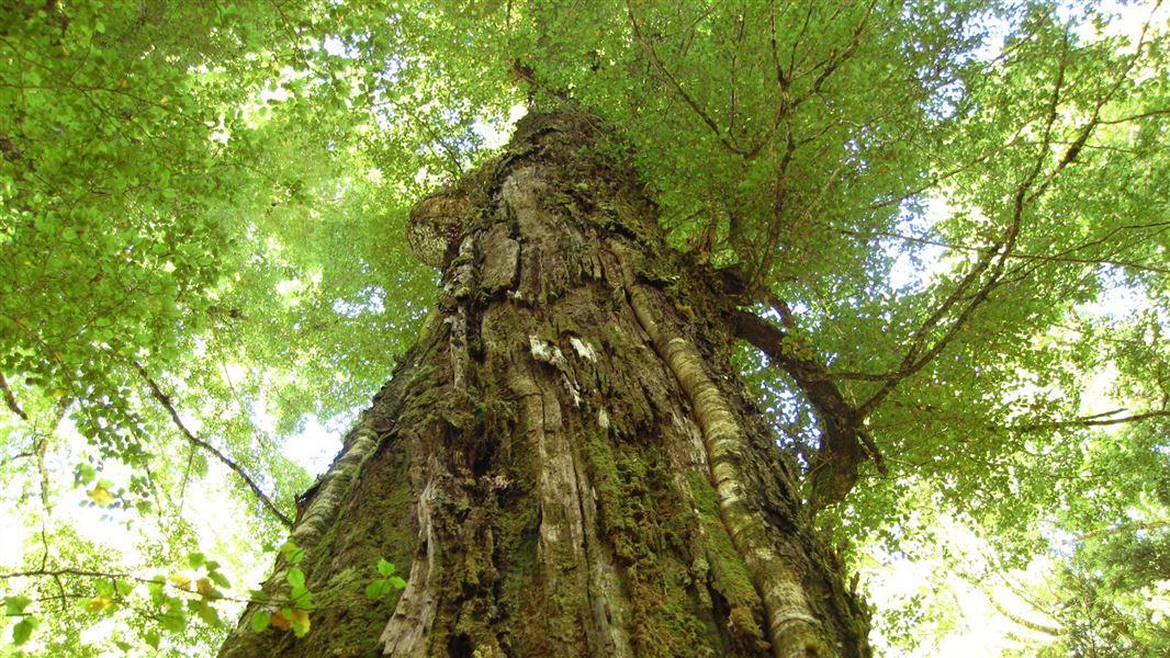 New Zealand Native Plants Conservation