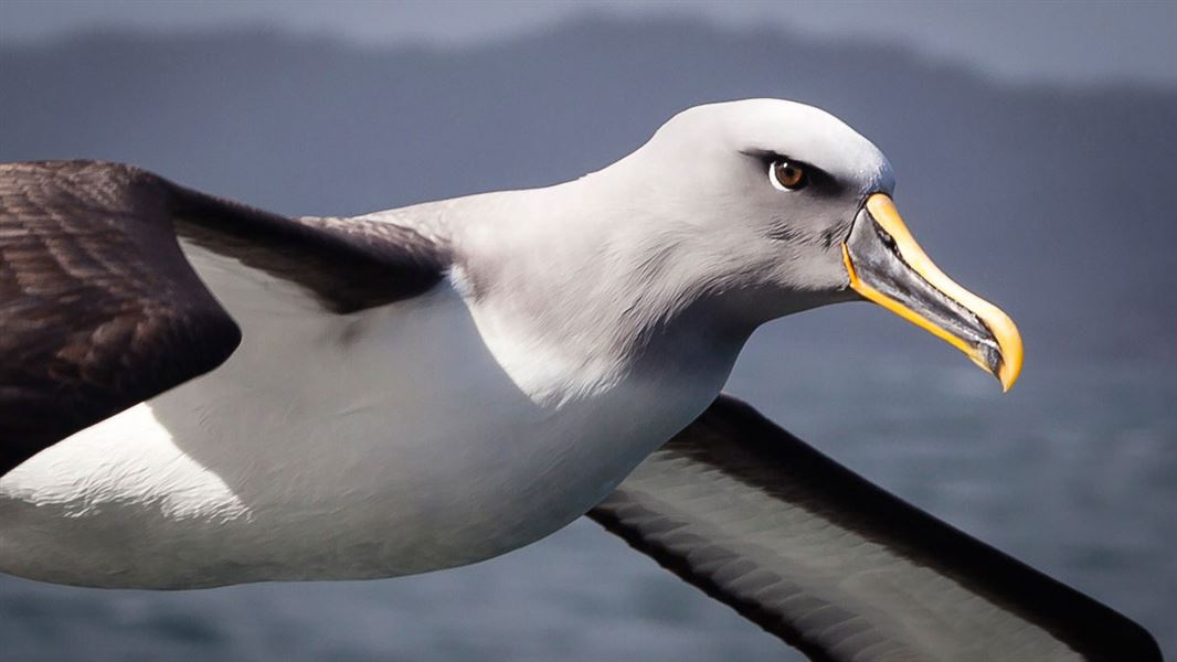 Better protection for seabirds