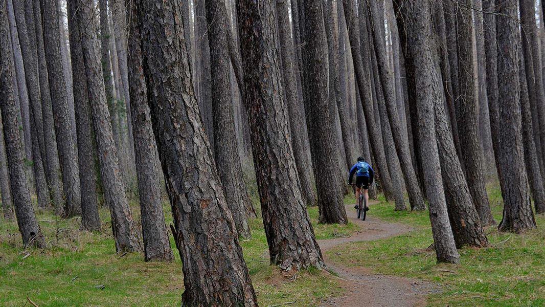 Resultado de imagen de Hanmer Forest Walks