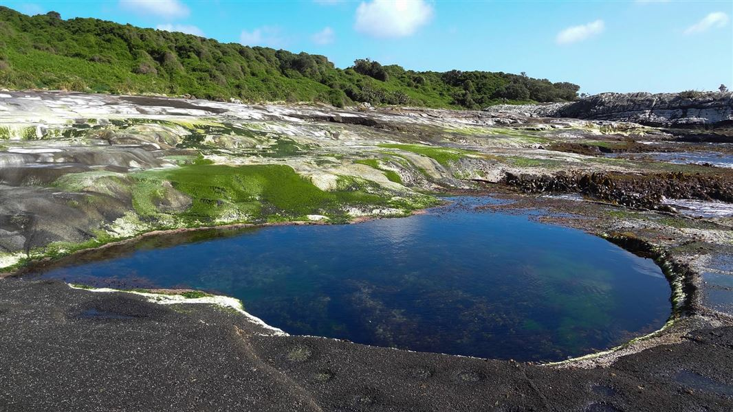 Chatham Islands  News And Events