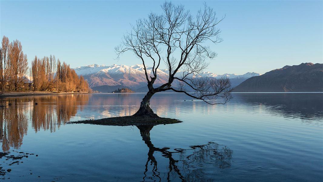 紐西蘭 News: Guardians Of Lake Wanaka: Statutory And Advisory Bodies