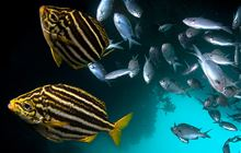 Marine fish and reptiles