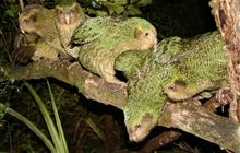 Kākāpō Recovery partners and supporters