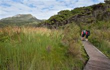 Upgrading Aotea/Great Barrier tracks to prevent kauri dieback spread