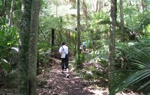 Okura Bush Walkway: Okura Bush and Albany Scenic Reserves, Auckland region