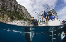 Poor Knights Islands Marine Reserve: Places to go in Northland