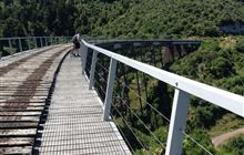 Ohakune Old Coach Road: Mountain biking in Tongariro National Park, Taranaki region