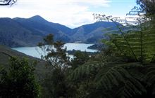 Nydia Track, Marlborough Sounds