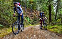 Reefton mountain bike tracks