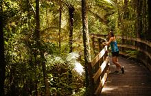 Pirongia Forest Park: Places to go in the Waikato region